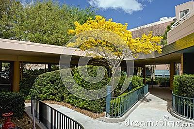 Walkways and shrubs