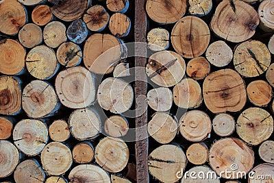 Wall Eucalyptus wood circle