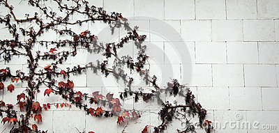 Wall with grape leaves