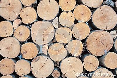 Wall large Eucalyptus wood circle