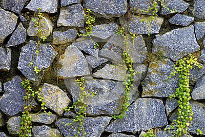 Wall of natural stone and sprouted grass