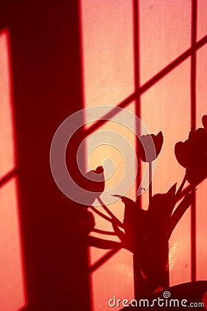 Wall shadow of tulips