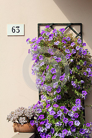 Wall with sixty-three number and flowers