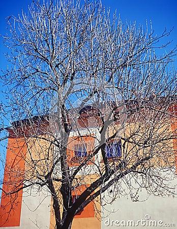 Wall, tree and a blue sky.