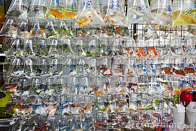 Wall of Tropical Fish for Sale