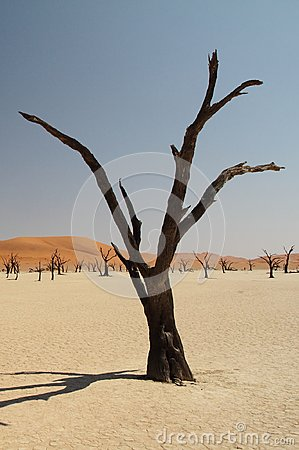 Free Wallpaper. Dry Tree In The Desert Royalty Free Stock Images - 104656719