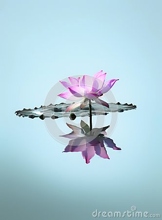 Free Wallpaper: Lotus Flower Stock Image - 104486411