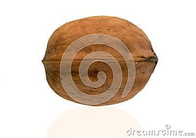 Walnut - isolated