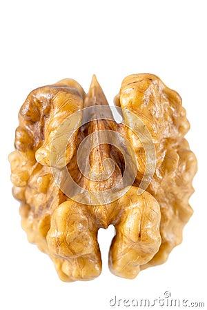 Walnut kernel macro