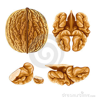 Walnut nut with shell