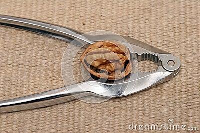 Walnut in a Nutcracker