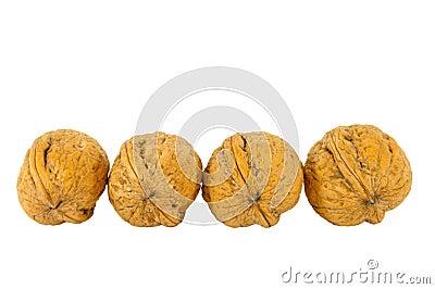 Walnut regular line