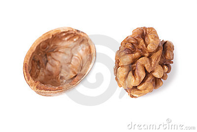 Walnut and shell
