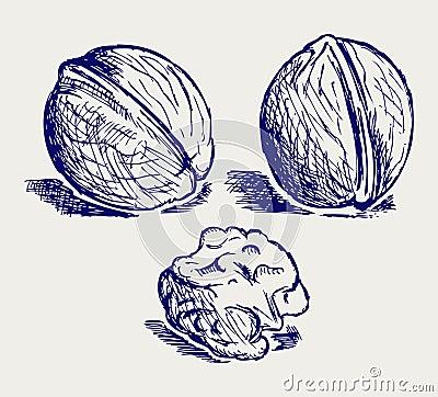 Walnut sketch