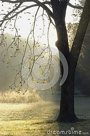 Free Walnut Tree Stock Photo - 276220