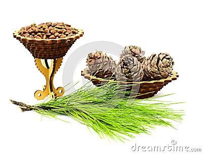Walnuts and cedar cones