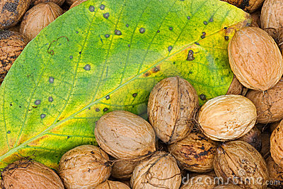 Walnuts and leaf.
