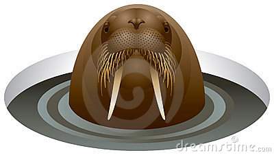 Walrus in the ice-hole