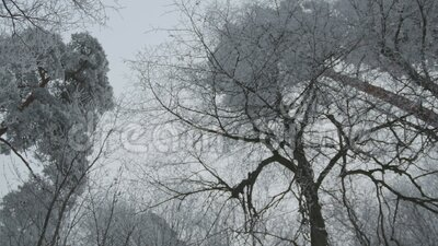 Wandelend langs Fairy Frozen Trees stock footage