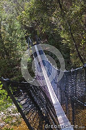 Wanderer-Hängebrücke über Franklin River