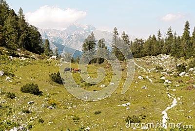 Wandern des Pfades in den julianischen Alpen