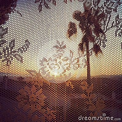 Warm Palms through Lace