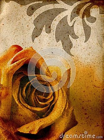 Warm rose background