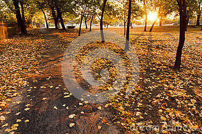 Warm yellow Autumn leaves line a park path at sunr