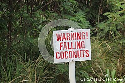 sign Warning falling coconuts