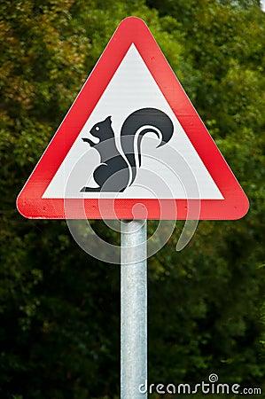 Warning... Squirrels!!