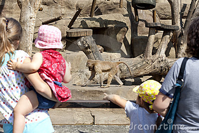 Warsaw zoo with monkey and tourists Editorial Stock Photo