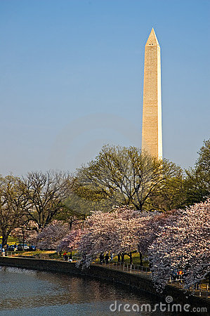 Washington Monument with Cherry Blossoms at the Tidal Basin