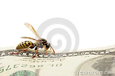Wasp on hundred dollar bill