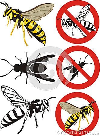 Wasp - warning signs