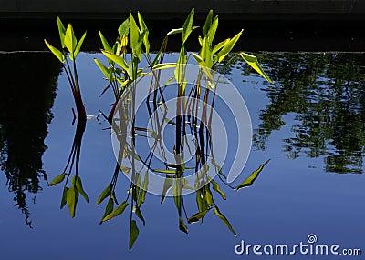 Wasser bedeckt A mit Gras