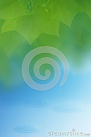 Wasser und Blätter