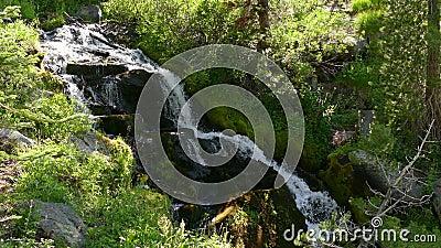 Wasserfall, der in den Wald in Kalifornien fließt stock video footage