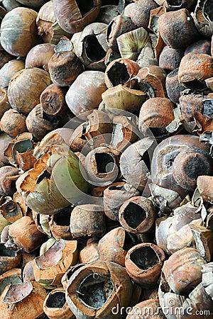 Waste Coconuts