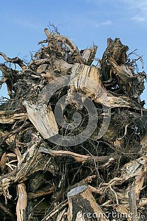 Free Waste Wood Stock Photography - 3616172
