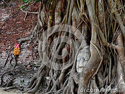 The stone Buddha head