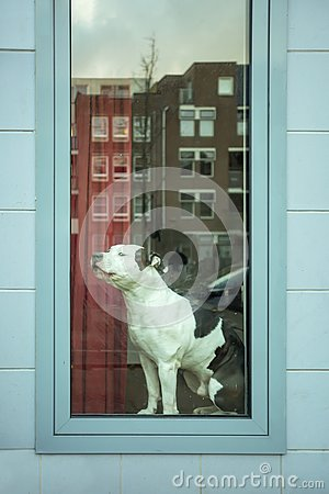 Free Watchdog At The Window Side Royalty Free Stock Photo - 158277115