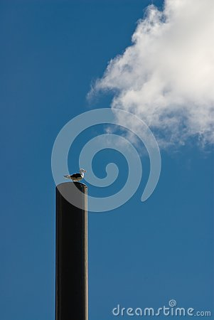 Watching seagull on pole
