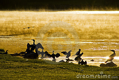 Water Birds at Sunrise