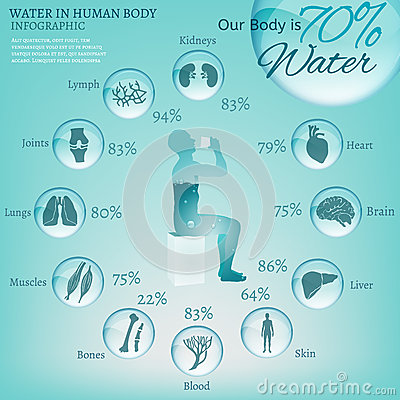 Water in Body Vector Illustration
