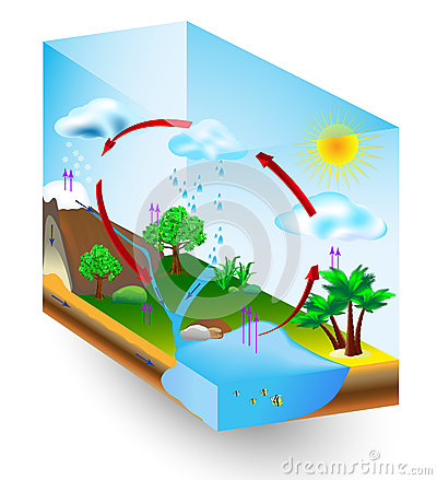 Water cycle. nature. Vector diagram