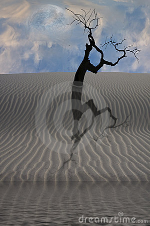 Water In Desert With Tree Stock Photos - Image: 14344133