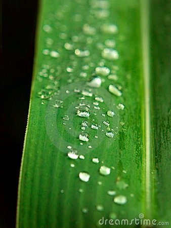 Free Water Dew On Leaf Stock Image - 2793921