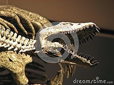 Water dinosaur skeleton