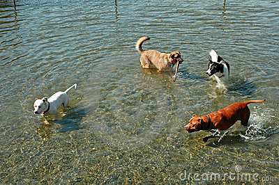 Water Dog Posse