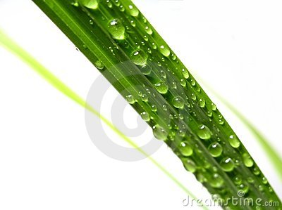 Water drip on palm leaf